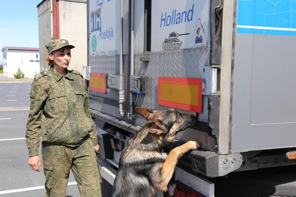 Служебные собаки помогли таможенникам найти килограммы наркотиков и тонны контрабанды