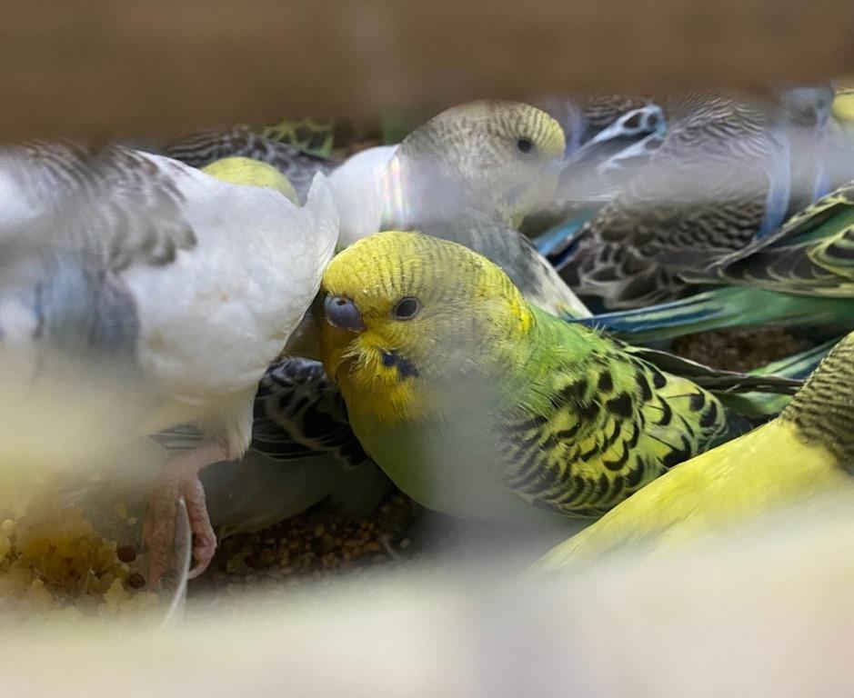 Попугаи 1